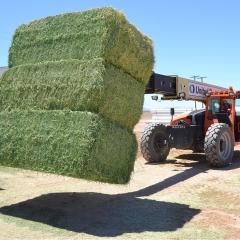 易牧优等牧草 草场每吨取货价