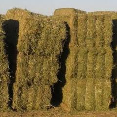 TOP HAY进口经济级苜蓿草 牧草 每吨价(上海港、天津港到港价)