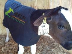 奶牛保温衣_40公斤