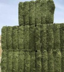 2016年苜蓿草捆 特级草