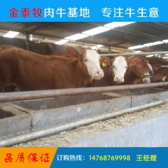 肉牛牛犊小牛犊批发利木赞牛犊肉牛牛犊鲁西黄牛牛犊场家直销