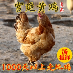 1000天多北京油鸡土鸡 老母鸡 农家散养 2-3斤 包邮
