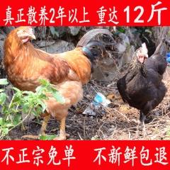 土鸡 老母鸡正宗农家散养自养新鲜活鸡农村月子三黄鸡草鸡 大公鸡