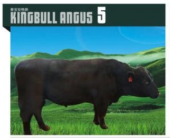 KINGBULL ANGUS 5  安格斯种牛  价格面议