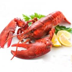 加拿大熟冻波士顿龙虾5-7斤