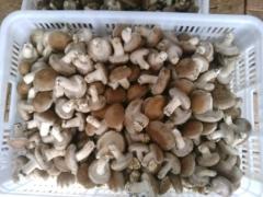 卢氏珍品香菇200g
